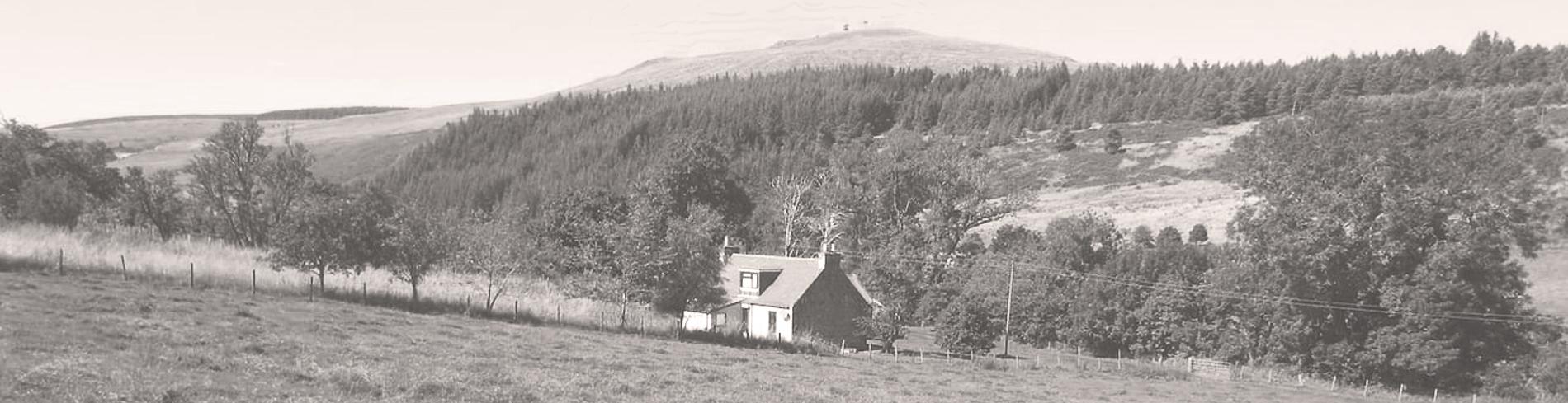 Lynebain-house-home3