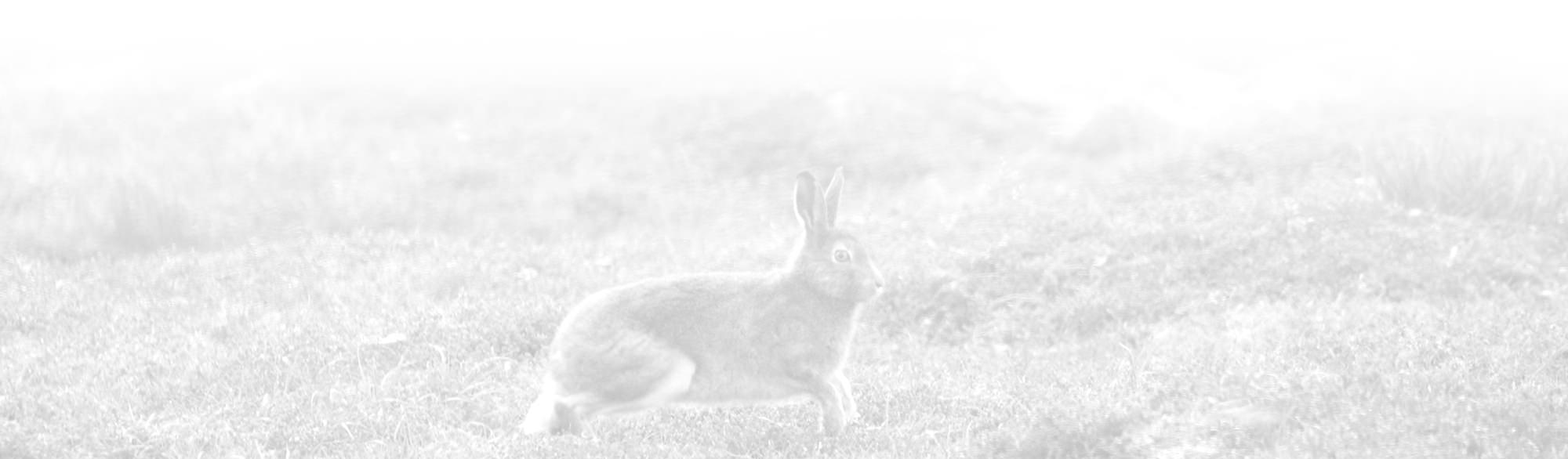 lynebain-activities-bottom-rabbit_mini