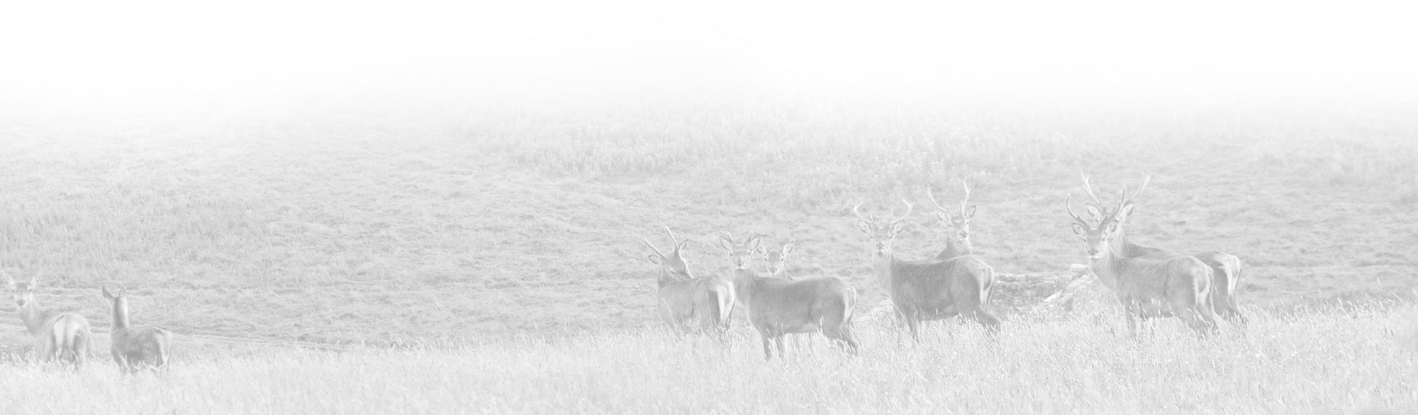 lynebain-bottom-deer