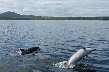 lynebain-dolphins-secc-gral