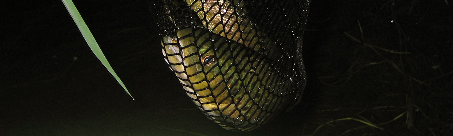 lynebain-fish-gallery3_mini